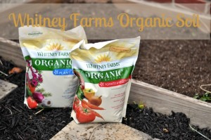 Homegrown Organic Tomatoes : Sponsored Post