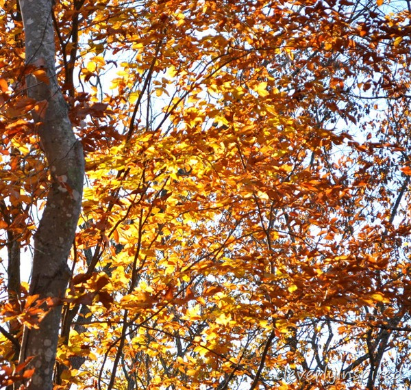 fall foliage @cleverlyinspired (3)