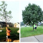 Back to School Tree Picture