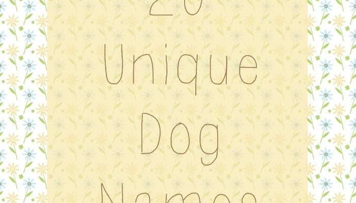 20 Unique Dog Names