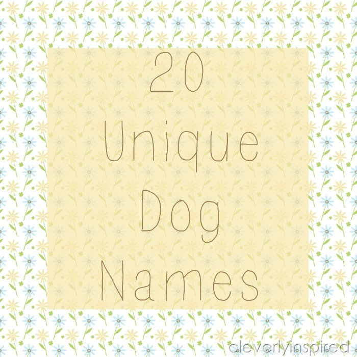 What Are Some Unique Dog Names