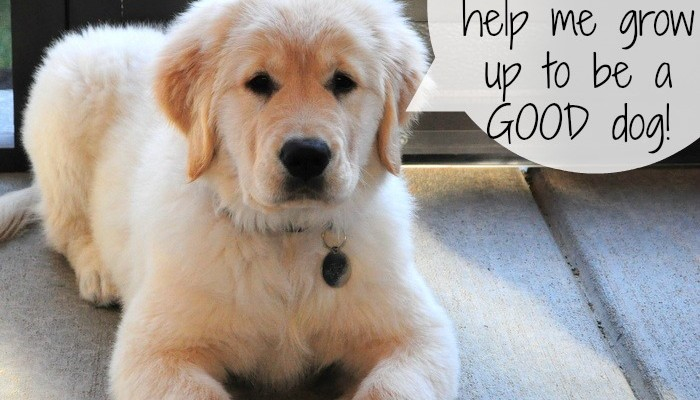 10 things to buy to raise a Good puppy