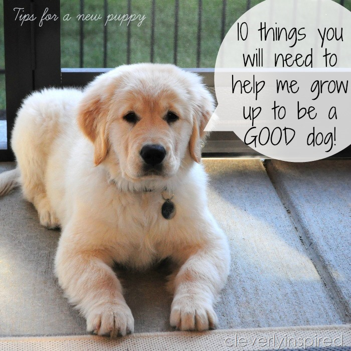 puppy tips @cleverlyinspired
