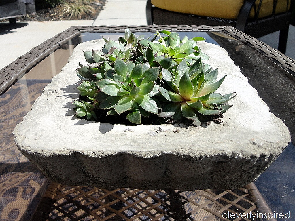 Diy concrete tray planter video tutorial cleverly inspired Concrete planters