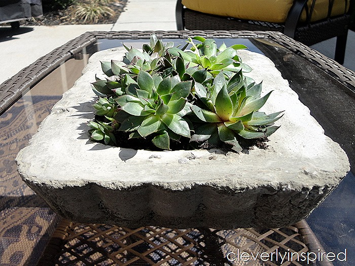 diy concrete planter @cleverlyinspired (3)