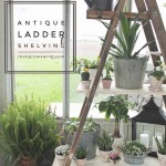 Antique-Ladder-Shelf-final.jpg
