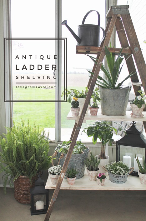 Antique-Ladder-Shelf-final