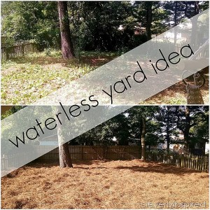 Idea for Grassless Yard (no maintenance Yard)