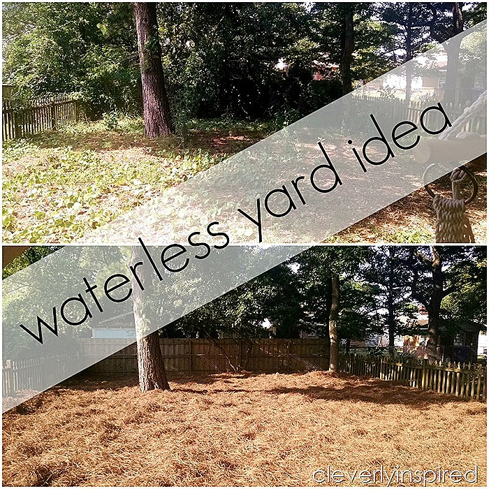 waterless yard idea @cleverlyinspired (1)