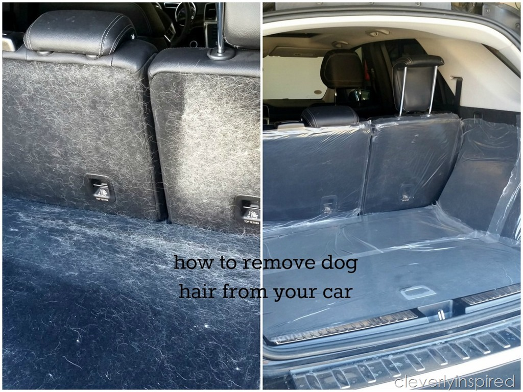 how to get dog hair out of vehicle carpet carpet vidalondon. Black Bedroom Furniture Sets. Home Design Ideas
